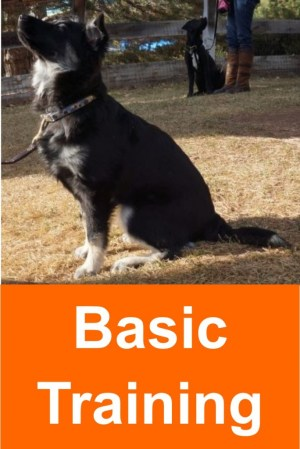 basic_training
