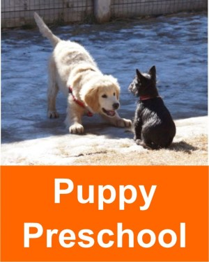 puppy_preschool