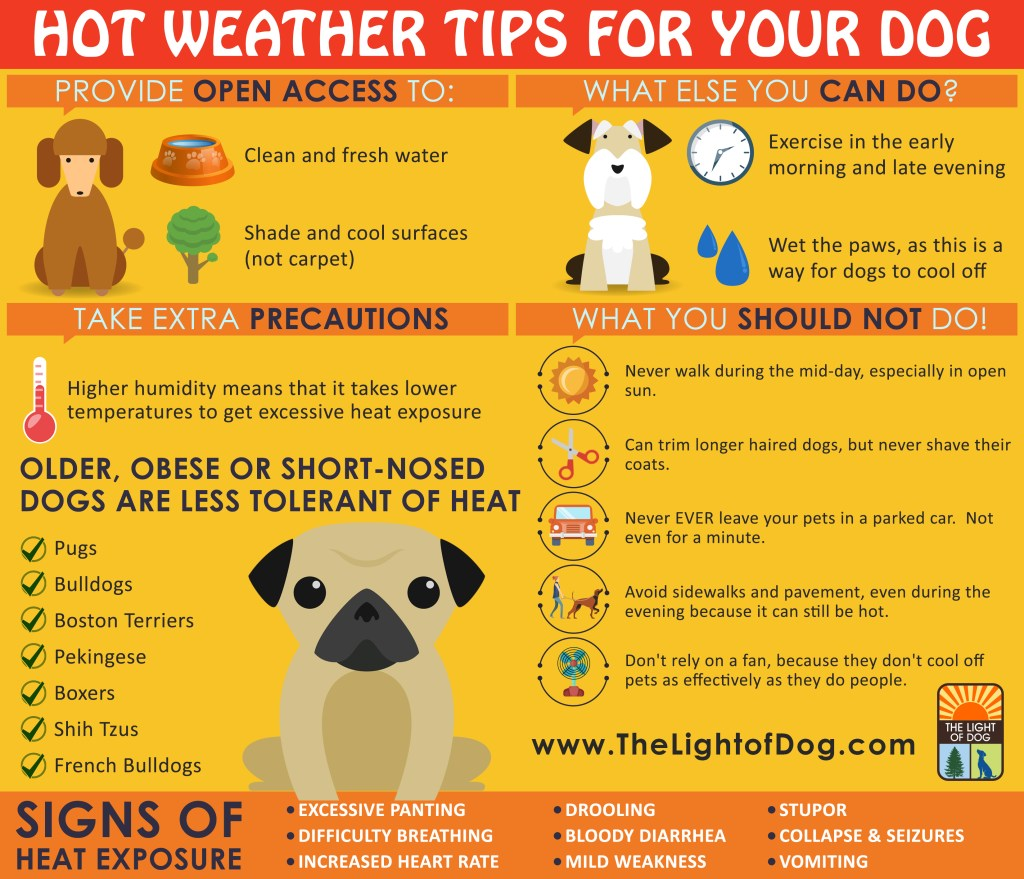 Hot weather tips for your dog