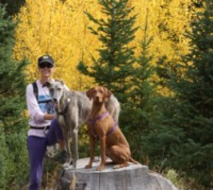 Dog Trainer's Traveling Tips