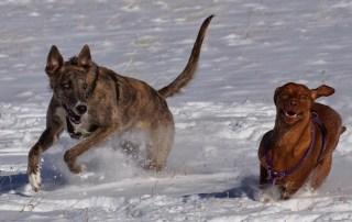 train an adventure dog