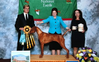 Interview with a reputable dog breeder