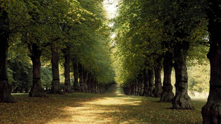 Clumber Park in Nottinghamshire is a popular location for Lincolnshire dog walkers. Photo: Experience Nottinghamshire