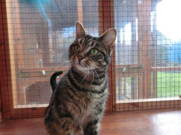 Lola is a kitten the Lincoln Cat Care charity are looking to rehome.