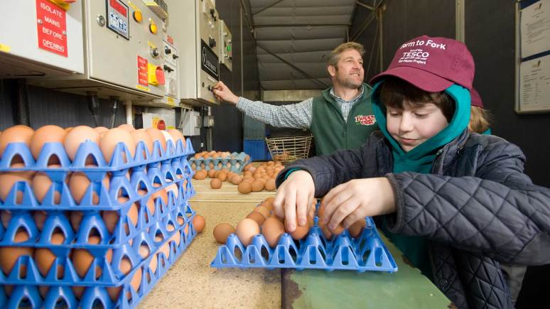 Children helped pack eggs, ready for supermarkets. Photo: Chris Vaughan