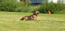 Example of German Shepherd dog. Photo: Emily Norton for The Lincolnite