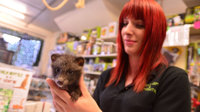 Alyss Dickinson and Freddie the raccoon dog. Photo: Steve Smailes for The Lincolnite