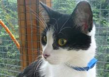 The rescued cat is now looked after by the Lincoln Cat Care charity.