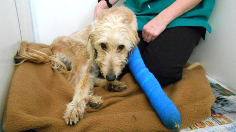 Autumn the Lurcher required a £1000 operation.