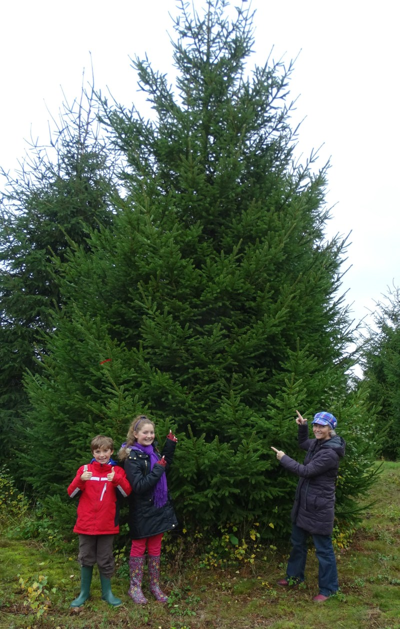 The Tree if Life is being donated by Doddington Hall