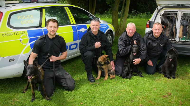 From left to right: PC Mark Haywood and Riggs, PC Jon Peacock and Olly, PC Stu Hazard and Lionel and PC Ian McDonald and Mac.