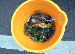 River Care volunteers filled one bucket full of broken glass from the River Witham. Photo: River Care