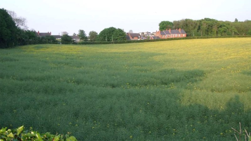 The site is currently used as an agricultural field.
