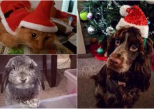 Are your pets dressing up for Christmas?