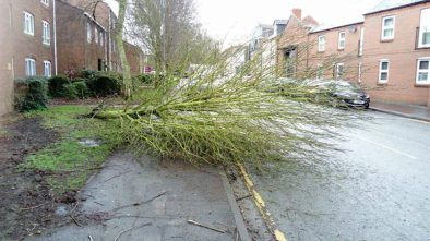 A fallen tree on St Rumbles Street. Photo: Nathan Harris