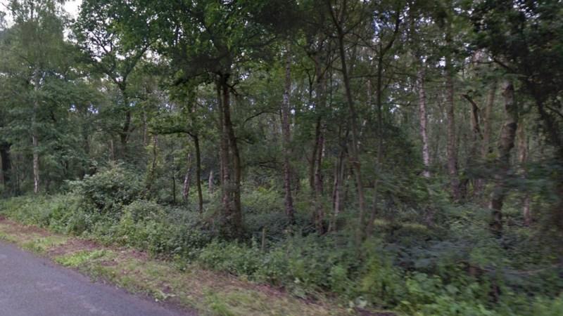 Ravensthorpe Woods