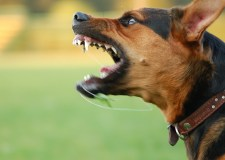 'Large black dog' bites girl on face