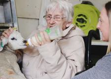 Lincoln care home residents meet new lambs