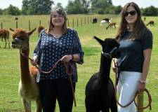 Babies born at new alpaca centre near Lincoln
