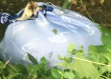 Woman finds dead dog dumped in plastic bag