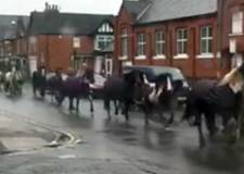 Around 50 horses gallop away in Lincoln common great escape