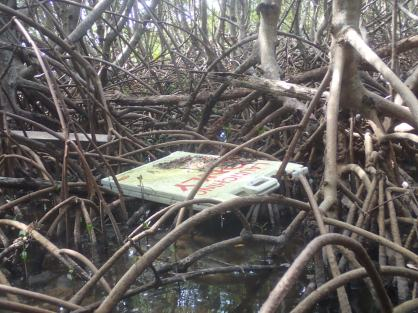 Sign trapped in mangrove roots