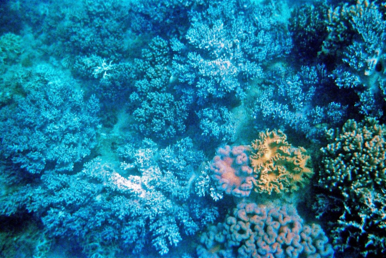 Underwater Photo Essay – Great Barrier Reef