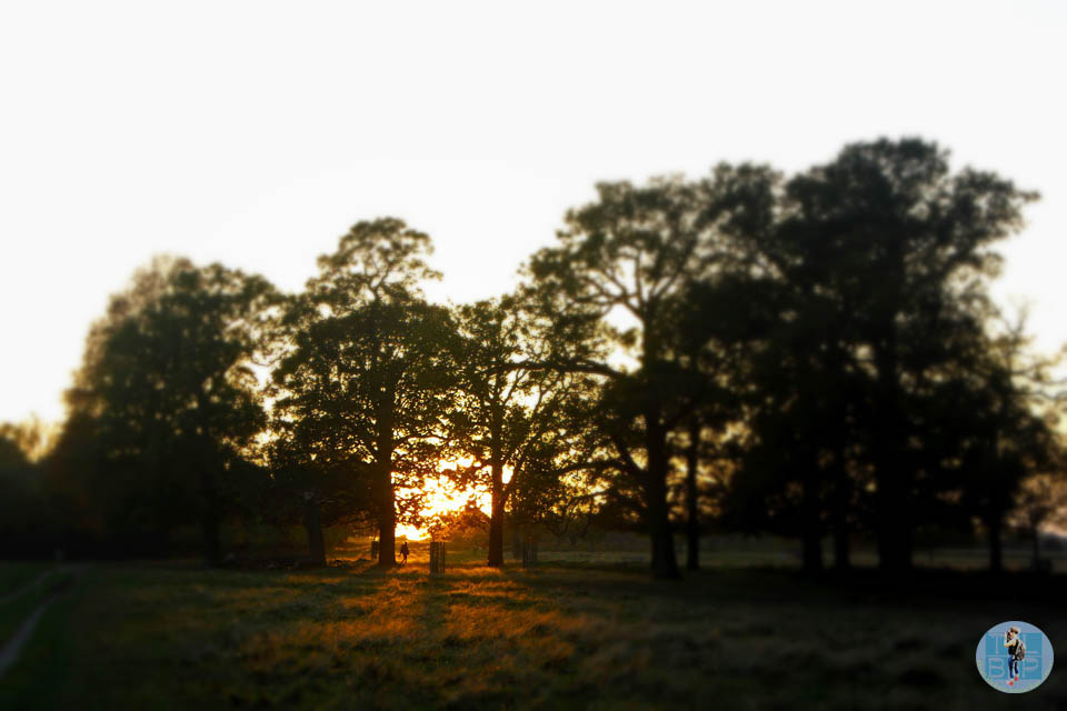 Richmond Park Sunset