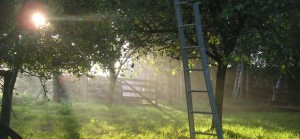 quirky accommodation with canopy and stars hollow-ash-herefordshire_apple-orchard_cs_gallery_preview