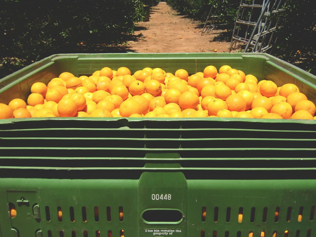 Oh those orange bins...