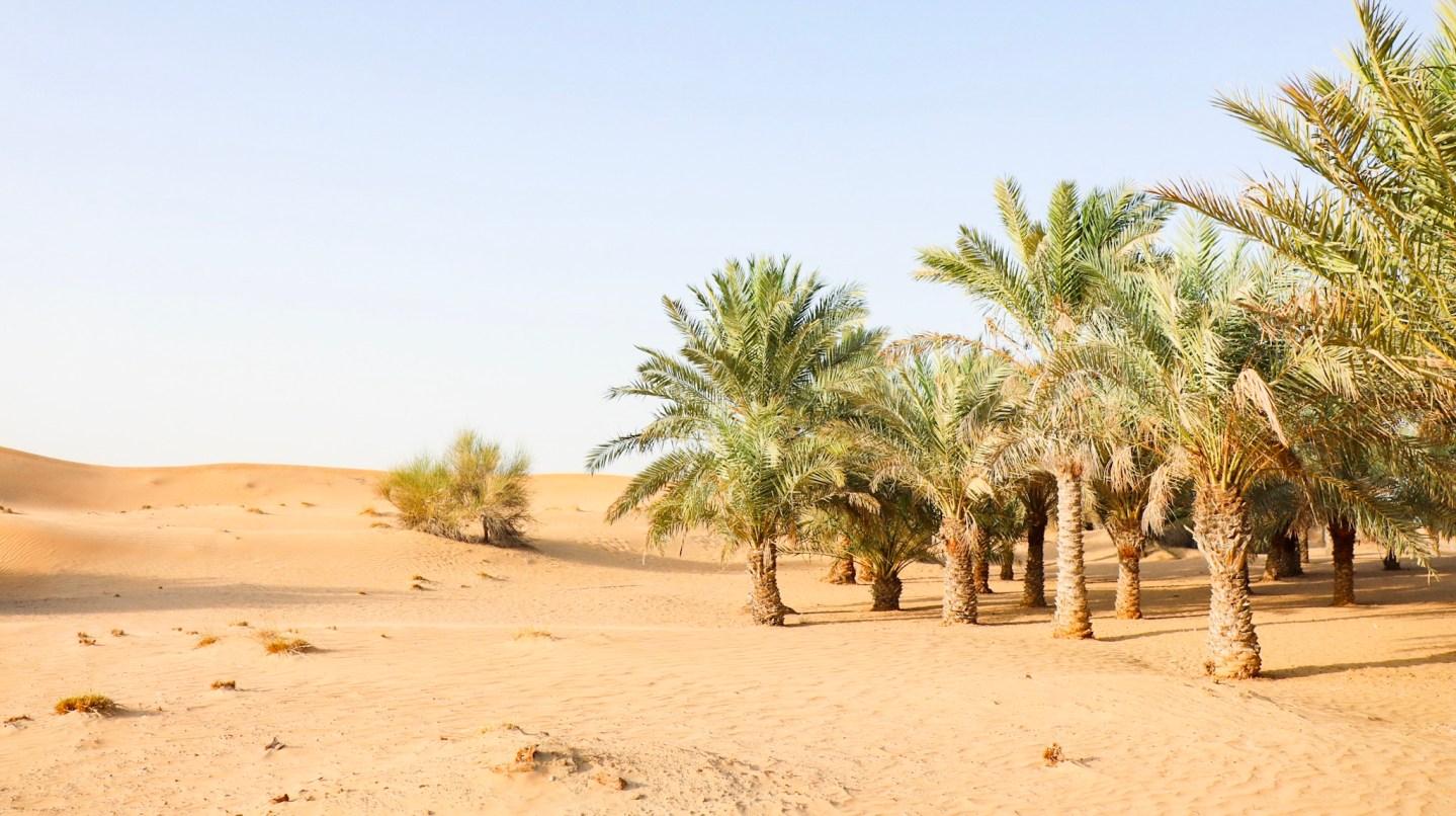 Tips for Settling into Expat Life in Dubai