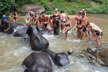 bathing-elephants-thailand