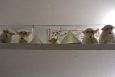 """Sheep at """"A vida Portuguesa"""", a delightful shop"""