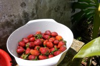 Washing strawberries outside for a family lunch
