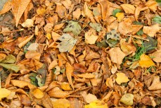 The ground covered in leaves