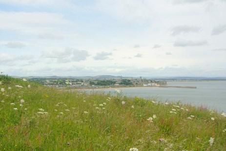 Flowery fields over St Andrews