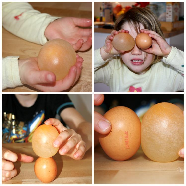 Egg Collage