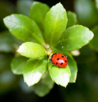 Ladybug! (2012)