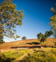 Kirkwood Preserve
