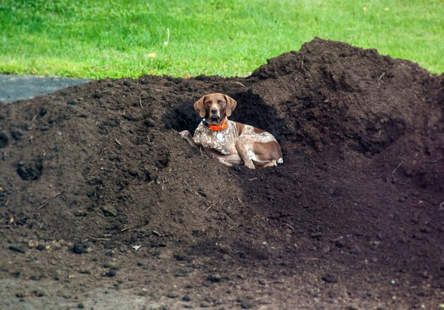 Lounging in the mulch pile
