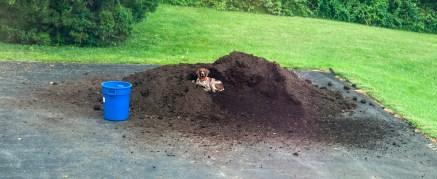 """MY mulch pile!"""