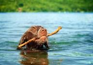 An excellent stick
