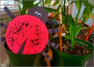Playful ladybug