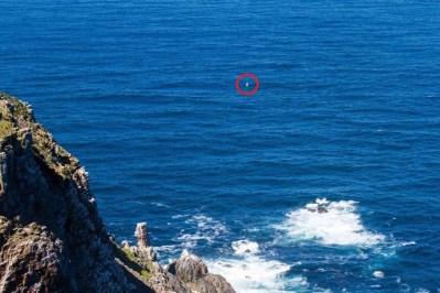 Little opi Cape Point 2
