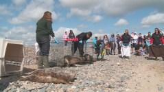 seal_release_seal_rescue_ireland