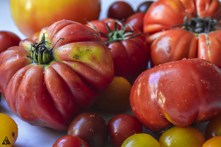 Closer look of fresh tomatoes