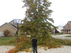taking down the tree 5