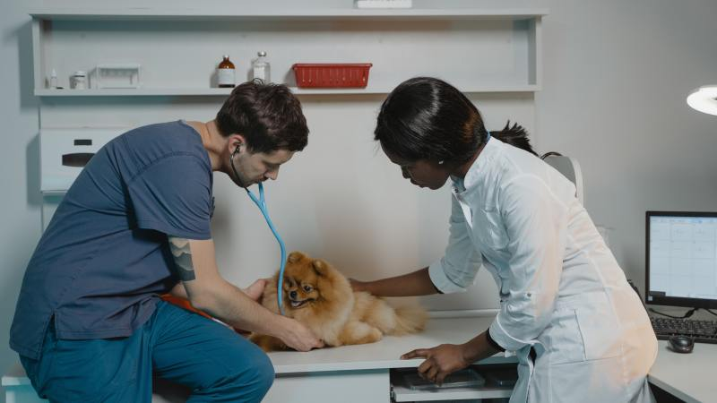 Dog Blood Donation: How Your Dog Can Help Save Another Dog's Life