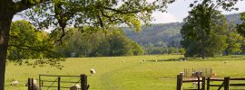 Sheep resting in gateway with green Herefordshire backdrop