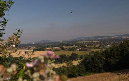 Landscape of harvest colours in Hereford Vale lwith Welsh mountains beyond